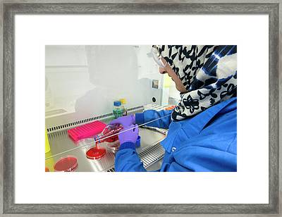 Agar Plate Preparation Framed Print by Louise Murray