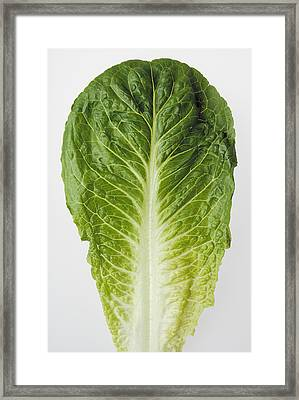 Agriculture - Closeup Of A Romaine Framed Print