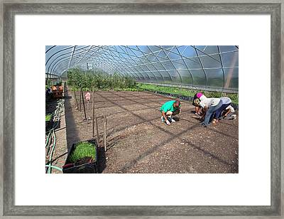 Agriculture Students Planting Onions Framed Print