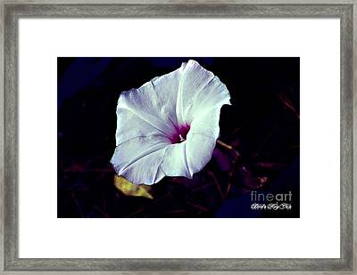 Alabama Wild Morning Glory Framed Print