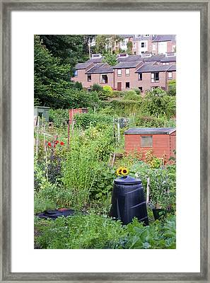 Allotments Framed Print by Ashley Cooper