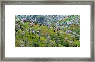 Almonds Framed Print by Guido Montanes Castillo