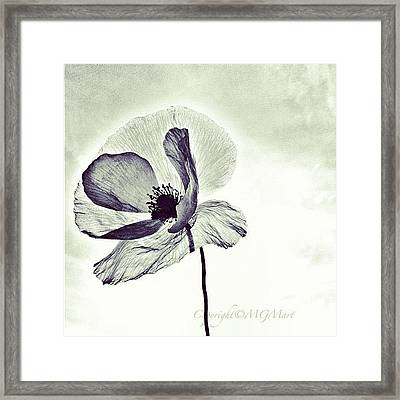 Alone Framed Print by Marianna Mills