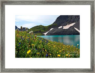 Alpine Flowers Framed Print