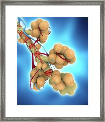Alveoli Framed Print