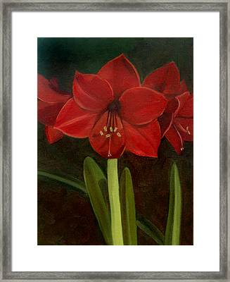 Amaryllis Framed Print by Nancy Griswold