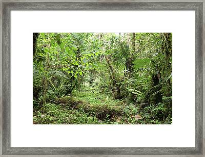 Amazonian Cloud Forest Framed Print
