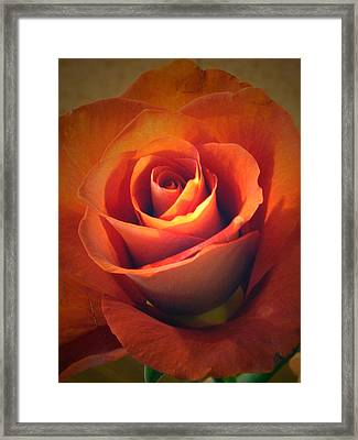 Amber Rose Framed Print