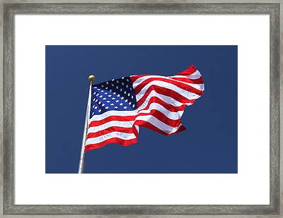 American Beauty Framed Print by James Hammen