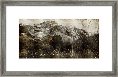 American Bison In The Rockies Framed Print by Adam Asar