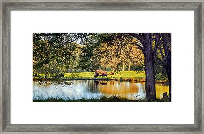 American Bison Framed Print by Sennie Pierson