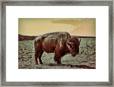 American Buffalo  Framed Print by Tony Grider