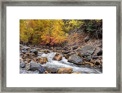 American Fork Canyon Creek In Autumn - Utah Framed Print by Gary Whitton