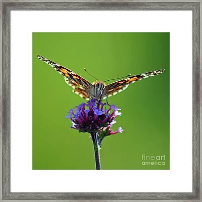 American Painted Lady Butterfly Framed Print by Karen Adams