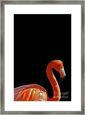 American Pink Flamingo Framed Print