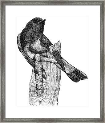 American Redstart Framed Print by Roger Hall