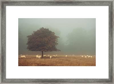 Amongst The Flock On An Autumn Morning Framed Print by Chris Fletcher