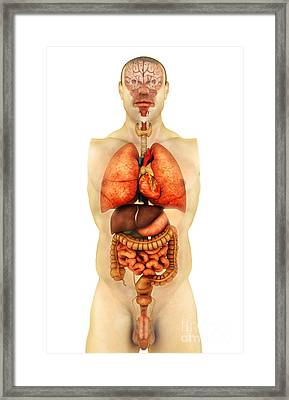 Anatomy Of Human Body Showing Whole Framed Print by Stocktrek Images