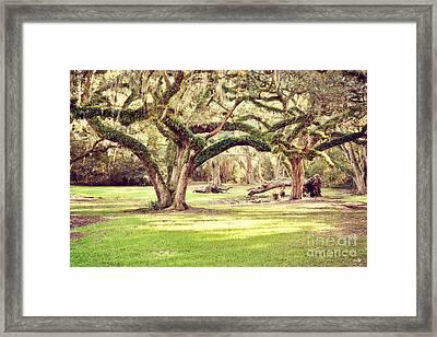 Ancient Oaks Framed Print by Scott Pellegrin