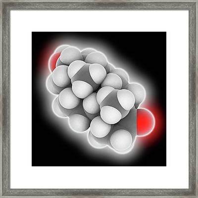 Androsterone Hormone Molecule Framed Print