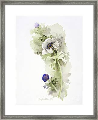 Anemone 4 Framed Print