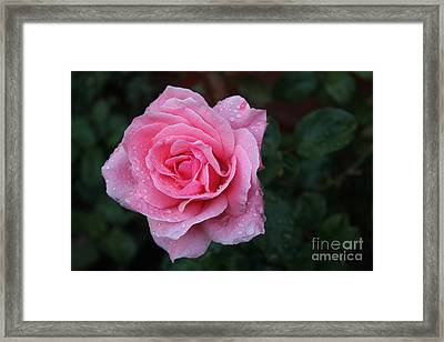 Angel Face Rose Framed Print