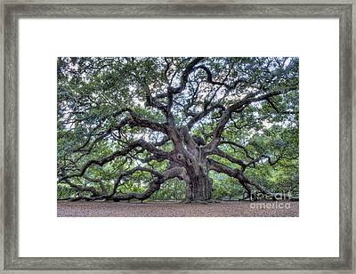 Angel Oak Framed Print by Dustin K Ryan