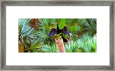 Anhinga Anhinga Anhinga On A Tree Framed Print by Panoramic Images