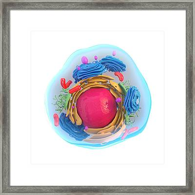 Animal Cell, Artwork Framed Print by Science Photo Library