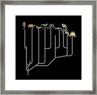 Animal Family Tree Framed Print by Mikkel Juul Jensen