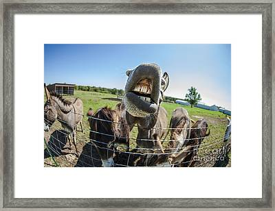 Animal Personalities Silly Talking Donkey With Whiskers Framed Print by Jani Bryson