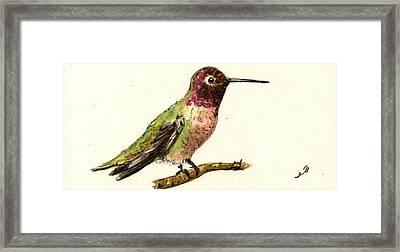 Anna S Hummingbird Framed Print