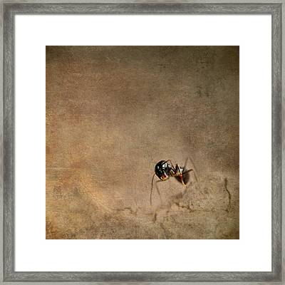 ant Framed Print by Heike Hultsch