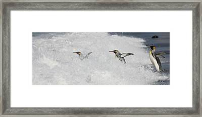 Antarctica, South Georgia, Salisbury Framed Print
