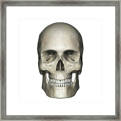 Anterior View Of Human Skull Anatomy Framed Print