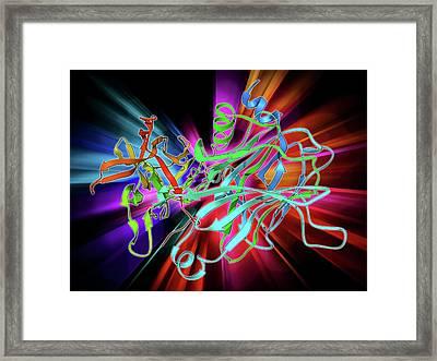 Anthrax Protective Antigen Molecule Framed Print