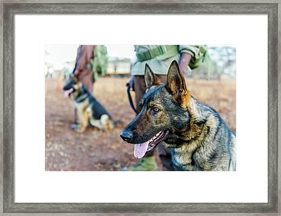 Anti-poaching Dog Patrol Framed Print