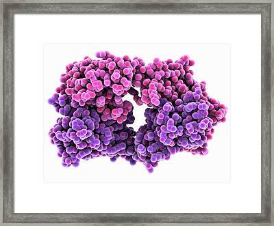 Anti-rotavirus Antibody Framed Print
