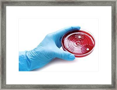 Antibiotic Sensitivity Test Framed Print by Aberration Films Ltd