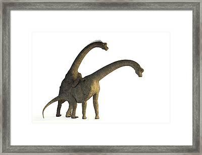 Apatosaurus Dinosaurs Mating Framed Print by Roger Harris