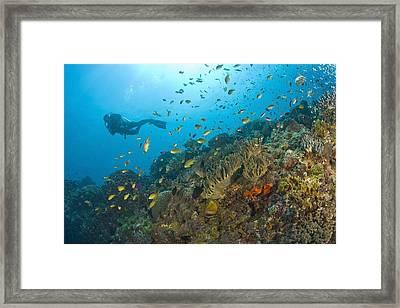 Apo Island Marine Park, Negros Oriental Framed Print