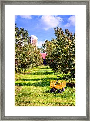 Apple Orchard Framed Print by Alexey Stiop
