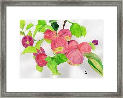 Apples Framed Print by Bav Patel