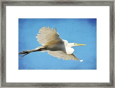 Aqua Framed Print by Fraida Gutovich