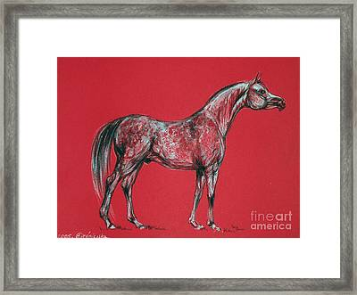 Arabian Horse Drawing Framed Print by Angel  Tarantella