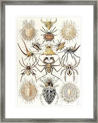 Arachnid Organisms, Artwork Framed Print