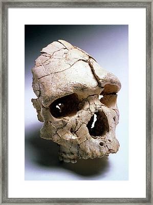 Arago Man Framed Print by John Reader/science Photo Library