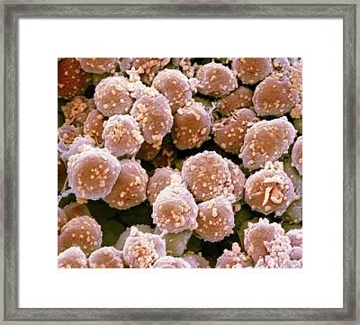 Archaea Framed Print