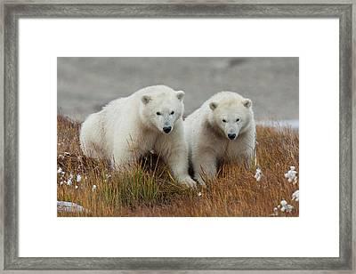Arctic National Wildlife Refuge (anwr Framed Print