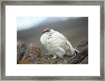 Arctic, Svalbard, Faksevagen Framed Print by Aliscia Young